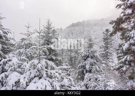Eine Berglandschaft mit verschneiten Tannen im frühen Winter - Vogesen (Frankreich), November 2017 - Stockfoto