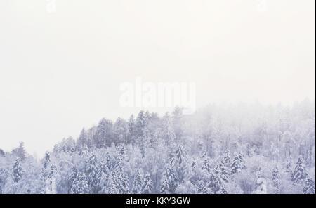 Winterlandschaft in den Vogesen mit schneebedeckten Tannen und eine neblige Atmosphäre. Die nebelverhangenen Himmel - Stockfoto
