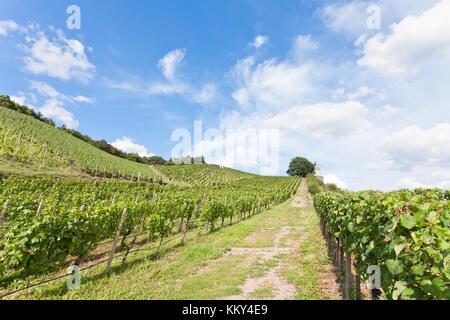 Dresden - Deutschland - Weinbau, Europa - Stockfoto