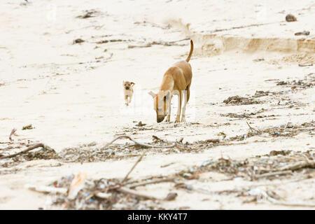 Hund - Mumie Ausbildung der Nachkommen, Sri Lanka, Asien - Stockfoto
