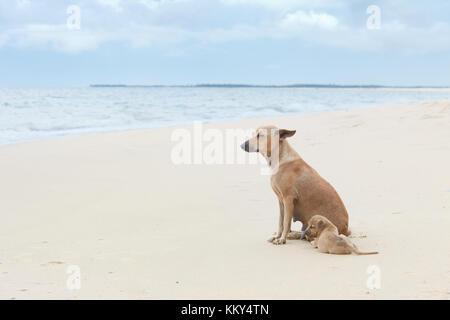 Genießen Sie den Wind, Sri Lanka, Asien - Stockfoto