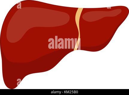Die Leber (Anatomie) Abbildung auf altes Papier Stockfoto, Bild ...