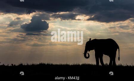 Afrikanischer Elefant gegen Sonnenstrahlen von der untergehenden Sonne silhouetted, an den Ufern des Chobe River, - Stockfoto