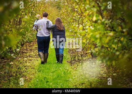 Ein Paar, eine Frau und Mann mit einem Kleinkind im Arm, gehen zwischen den Zeilen von Obstbäumen im Herbst. - Stockfoto