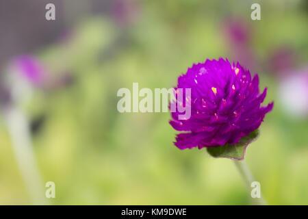 Blur Blume - Stockfoto