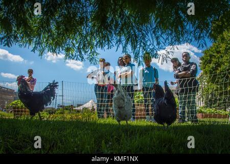 Besucher die Hühner an das US-Landwirtschaftsministerium Völker Garten und Farmers Market an der USDA-Hauptquartier - Stockfoto