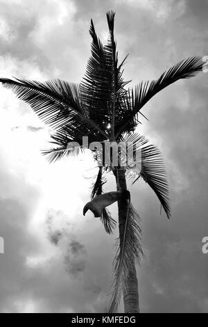 Einsame Palme mit Hintergrundinformationen zu verschiedenen psychedelischen Farben Townsville, Queensland, Australien - Stockfoto