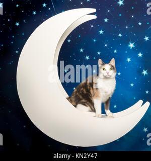 Süße bunte Katze im Mond sitzend mit Sternenhimmel blauer Hintergrund - Stockfoto