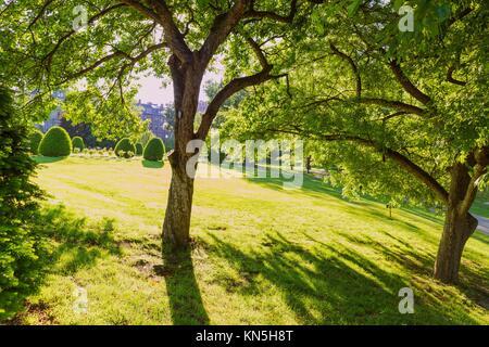 Boston Common Public Garden tree in Massachusetts, USA. - Stockfoto