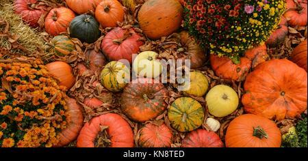 Vielfältiges Sortiment der Kürbisse auf den Hintergrund. Herbst Ernte, Frankreich. - Stockfoto