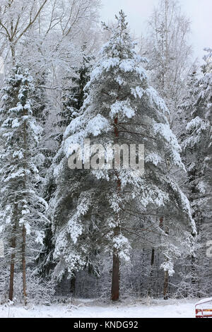 Winterschnee auf einsamen Baum PARK - Stockfoto