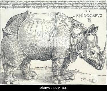 Das Nashorn. Künstler: Albrecht Dürer (Deutsch, Nürnberg 1471-1528 Nürnberg); Datum: 1515; Medium: Holzschnitt; - Stockfoto