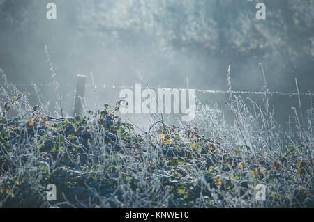 Frost bedeckt Stacheldrahtzaun und Gras an einem nebligen kalten Winter - Stockfoto