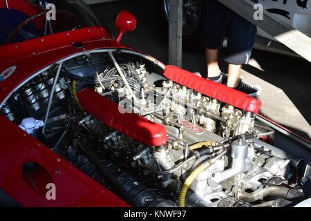 Matteo Panini, Maserati 250 F, V12, 2014, klassische Rennwagen, Goodwood Revival, Goodwood Revival 2014, Goodwood - Stockfoto