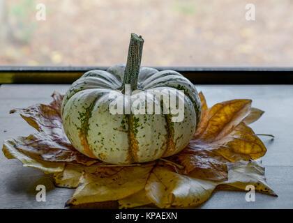 """""""Lil'Pump-Ke-Mon"""" Kürbis Sorte in Gelb, trocken Pappel über Holz- Hintergrund gegen ein Fenster Blätter - Stockfoto"""