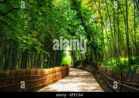 Straße unter den Bambuswald - Stockfoto