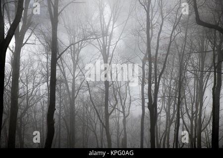 Winter Forest eingehüllt in Nebel, North Carolina, USA. - Stockfoto