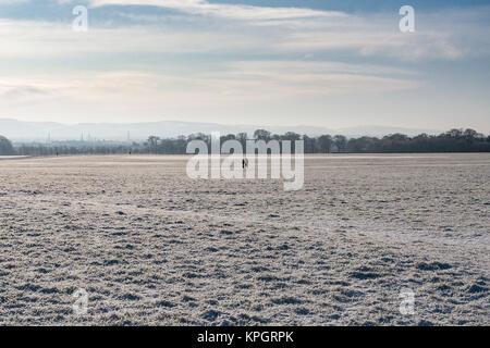 Menschen waling im Schnee im Phoenix Park in Dublin an einem wunderschönen Wintermorgen am ersten Tag des Neuen - Stockfoto