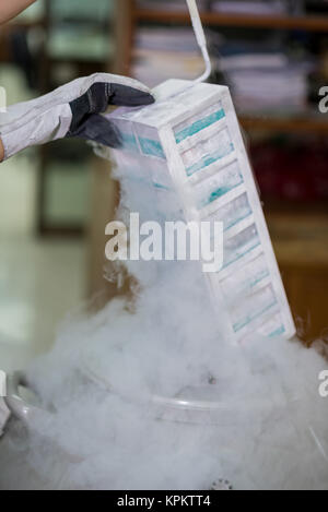 Techniker entfernen Exemplare aus dem Gefrierfach - Stockfoto