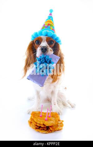 Cavalier King Charles Birthday Cake