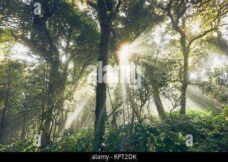 Geheimnisvolle sunrise im tiefen Regenwald Thailand Berge. - Stockfoto
