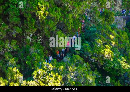 Die Menschen wandern in einer Laurisilva Wald. - Stockfoto