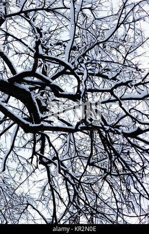 Kahle Äste im winter - Stockfoto