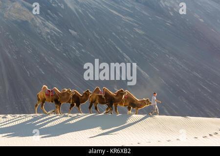 Der Mensch, die kleine Gruppe von Kamelen in der Wüste. - Stockfoto