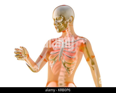 Weibliche Anatomie Visualisierung. 3D Illustration isoliert auf ...