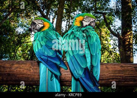 Paar Ara Papageien - Stockfoto