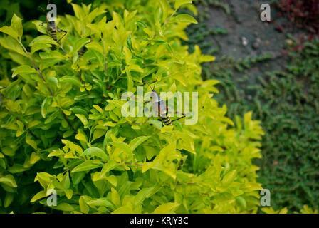 Große Heuschrecken auf einem ziemlich grüne Pflanze - Stockfoto