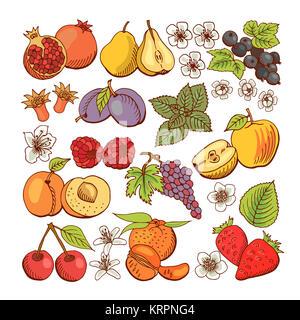 Satz farbiger Beeren und Obst Symbole