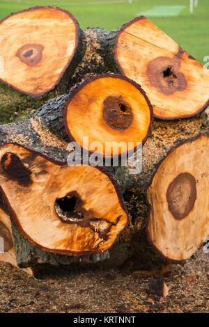 Ein frisch gefällten Kastanie Baumstamm, die von einem Baum Chirurg aufgrund der schlechten Zustand & decay als - Stockfoto