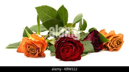 rote rose blume mit stamm und bl tter kletterrosen im sommergarten einzelnes objekt isoliert. Black Bedroom Furniture Sets. Home Design Ideas
