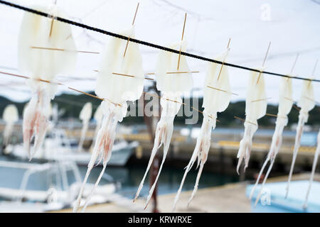 Squid für Trocknen - Stockfoto