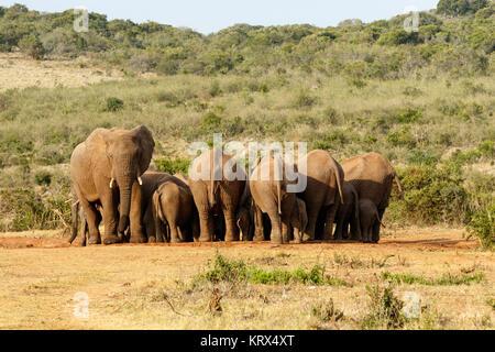 Die Frau und Baby Elefanten sammeln - Stockfoto