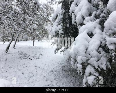 Bäume mit einer dicken Schicht Schnee bedeckt - Stockfoto