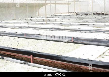 hydroponic in farm methode der wachsenden organischen pflanzen mit n hrstoffen im wasser anbau. Black Bedroom Furniture Sets. Home Design Ideas