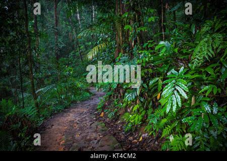 Pfad im Dschungel. Sinharaja Regenwald in Sri Lanka. - Stockfoto