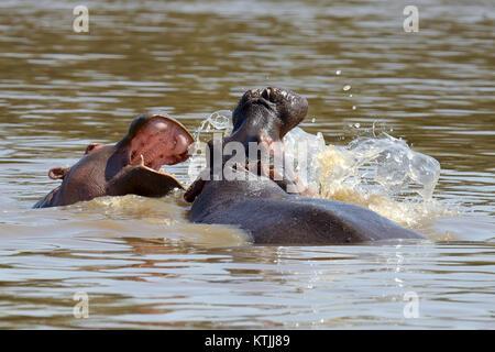 Nilpferd auf See in Natioanl Park von Afrika - Stockfoto