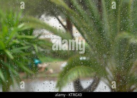 Blick durch ein Fenster mit Regentropfen auf einer nassen Straße mit Palm Blätter an einem regnerischen Sommertag. - Stockfoto