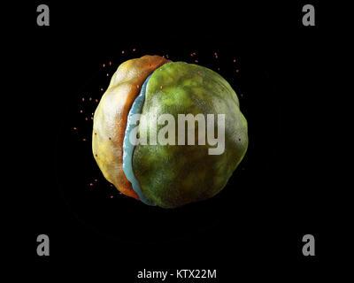 3d-Abbildung des Virus Zellen schließen bis auf schwarzem Hintergrund isoliert. - Stockfoto