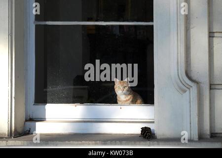 Eine rothaarige Katze sitzt aus dem großen Fenster eines viktorianischen Haus auf einer Straße in Großbritannien. - Stockfoto