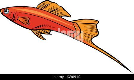 Isolierte swordtail aquarium fisch - Stockfoto