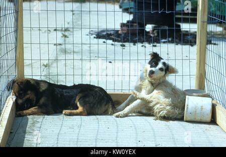 Hier sind zwei Hunde mit stummen Tollwut, als Depression manifestieren, und der Versuch einer selbst auferlegten - Stockfoto