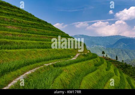 Schöne Aussicht Longsheng Reis Terrassen in der Nähe der Der dazhai Village in der Provinz Guangxi, China; Konzept - Stockfoto