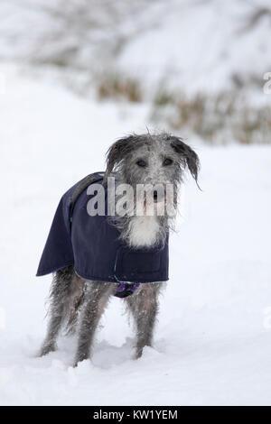 Denbighshire, UK. 29 Dez, 2017. UK Wetter. Ein kälteeinbruch mit Schnee verursacht Störungen für viele Teile des - Stockfoto