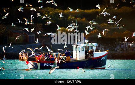 Ein Fischerboot umgeben von Möwen in Balaclava Bay, Portland, an der Jurassic Coast in Dorset, aus offshore fotografiert. - Stockfoto