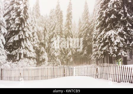 Tannen wald mit Schnee mit einem schneebedeckten Zaun vorne an einem nebligen und Moody Tag der Winter, Vogesen, - Stockfoto