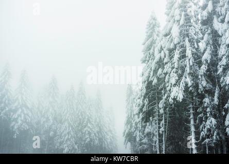 Winterlandschaft in den Vogesen, Frankreich: verschneite Tannen an einem nebligen und Moody Tag. - Stockfoto